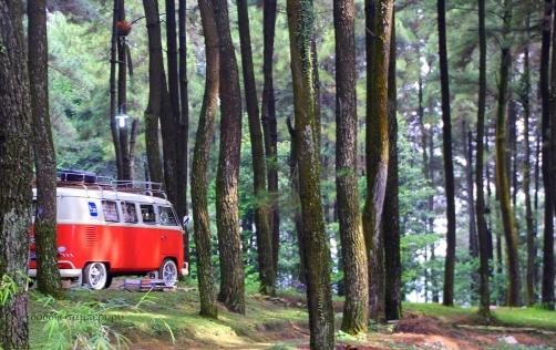 Location: pine forest, Gunung Pancar, 400m asl, Bogor.