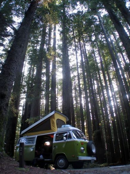 A bay camper in the wood.